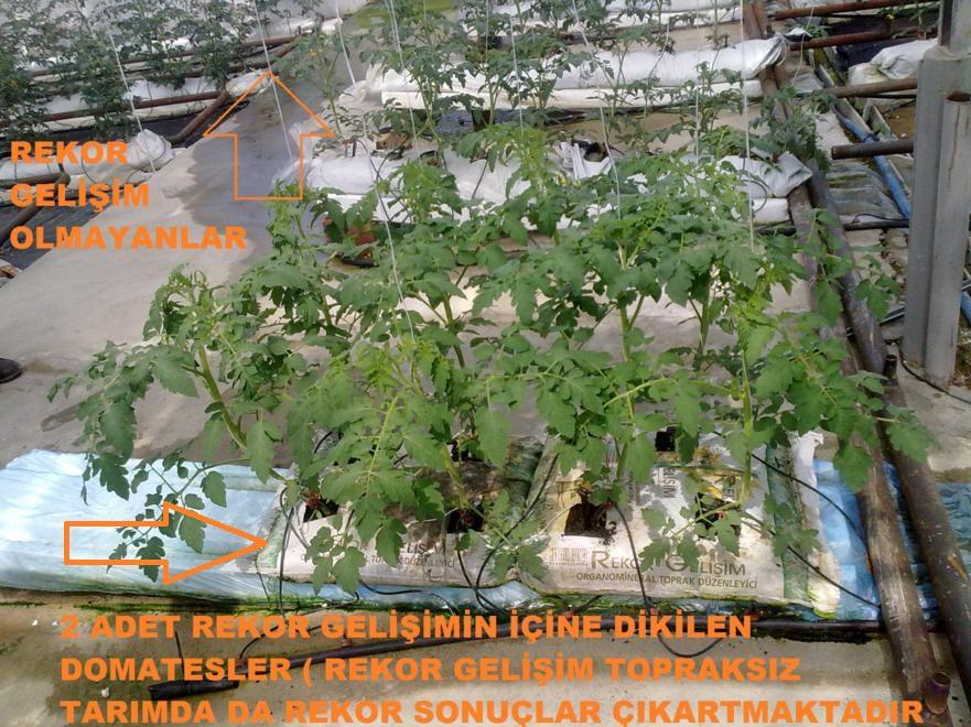 Rekor Gelişim Topraksız Tarım uygulamaları